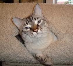 Jellicle: A Purrfurred Pet Care Service Pet Client