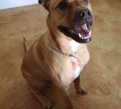 Elko: Las Vegas Dog Sitting Client