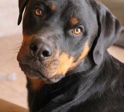 Jager: Las Vegas Dog Walking Client