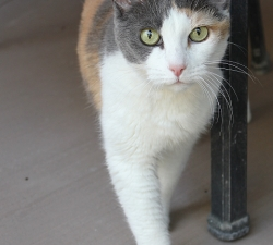 Joy: Las Vegas Cat Sitting Client