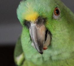 Lulubelle: Las Vegas Pet Sitting Client