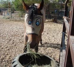 Horsey: Las Vegas Horse Care Client