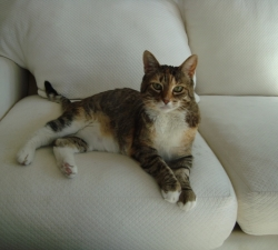 Cali: North Las Vegas Pet Sitting Client