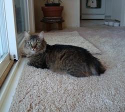 Farrell: Las Vegas Cat Sitting Client