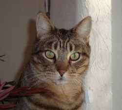 Bud: A Purrfurred Pet Care Service Pet Client