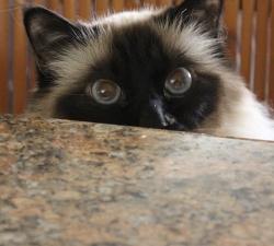 Ben: Henderson Cat Sitting client