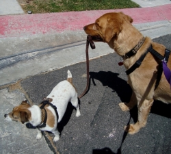 Fi and Jacks: Las Vegas Pet Sitting Clients